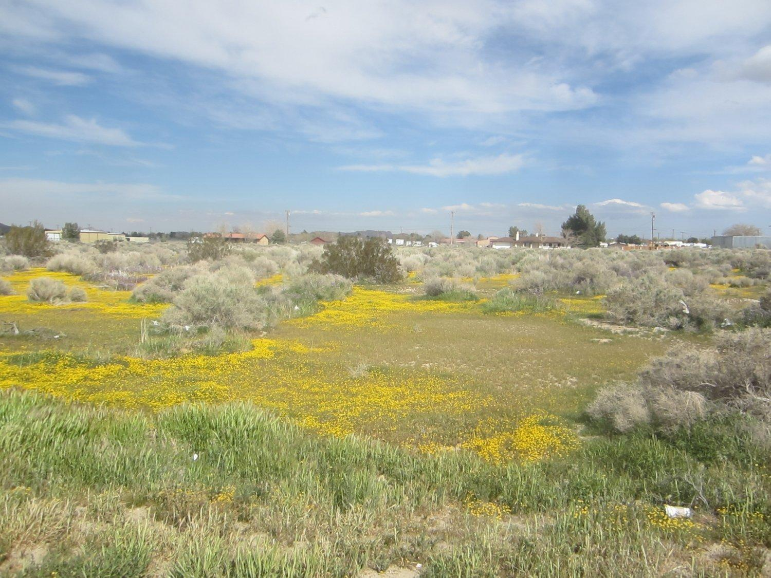 90th St. East #Ste Pav Property Photo - Sun Village, CA real estate listing