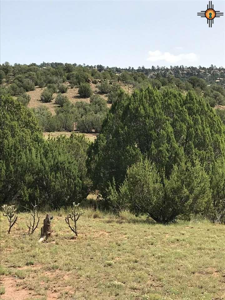 CR B27 Tracts C3 & C4 Property Photo - Los Montoyas, NM real estate listing