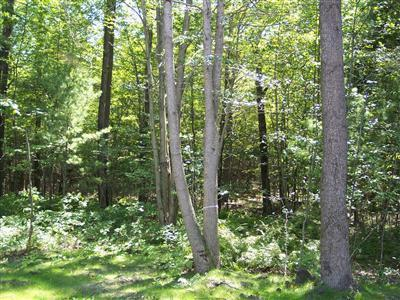 N Darling Lane Property Photo - Ganges Twp, MI real estate listing