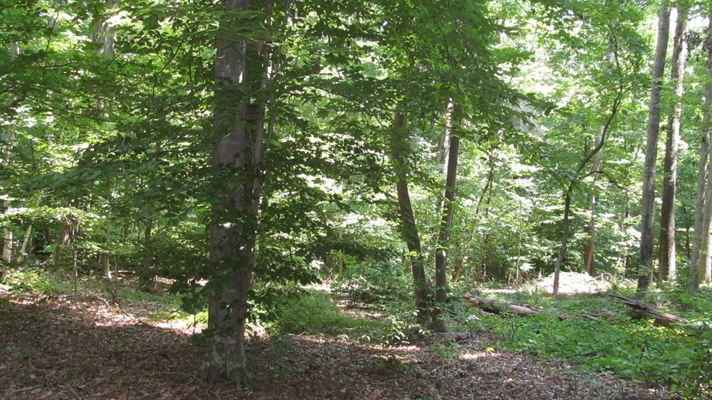Lot 73 Stacey Court Property Photo 5