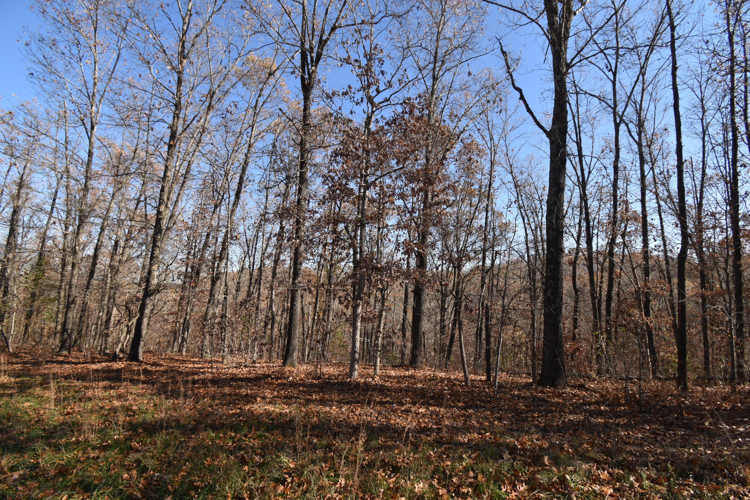 Lot 72 Lost In Woods Lane Property Photo