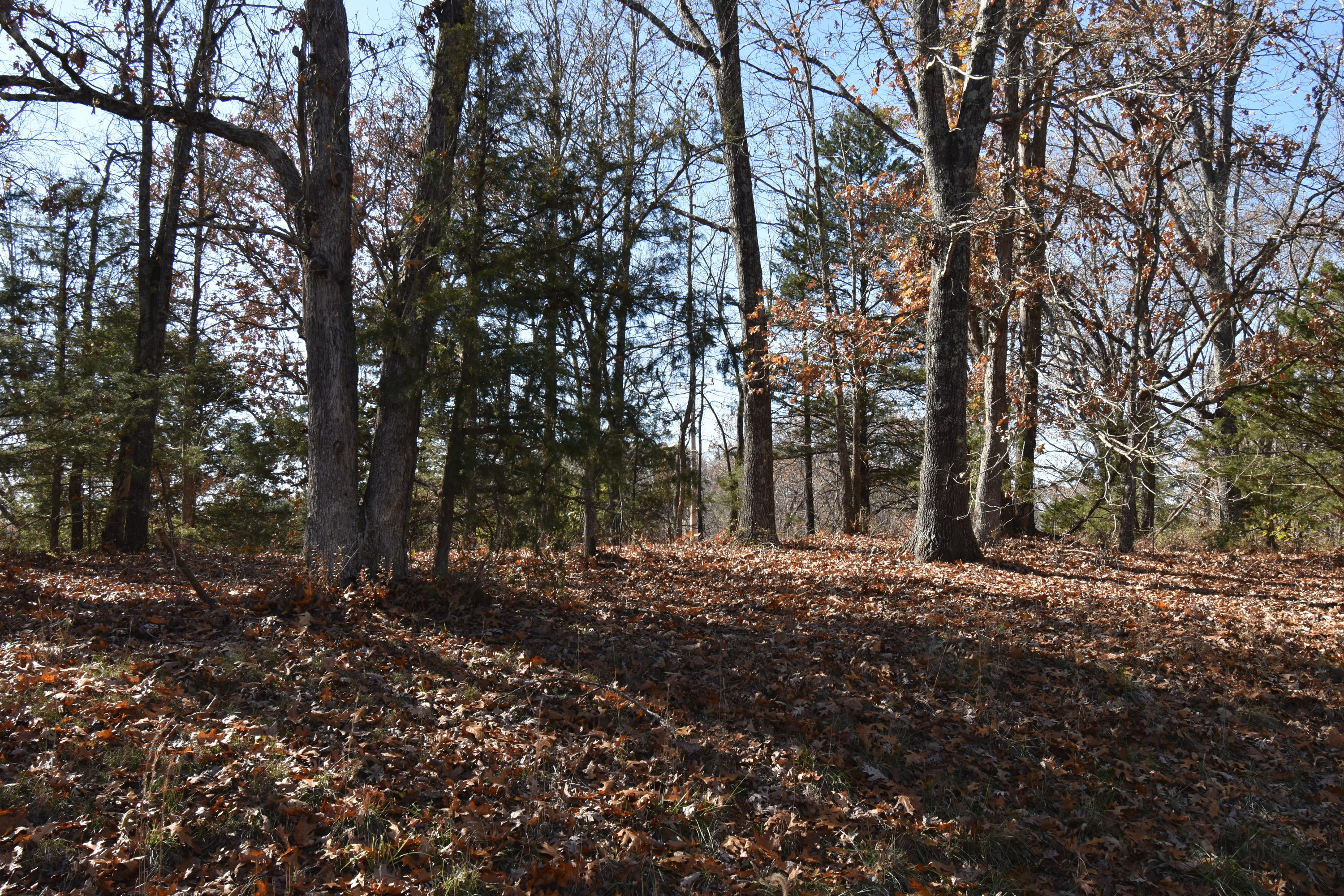 Lot 69 Lost In Woods Lane Property Photo