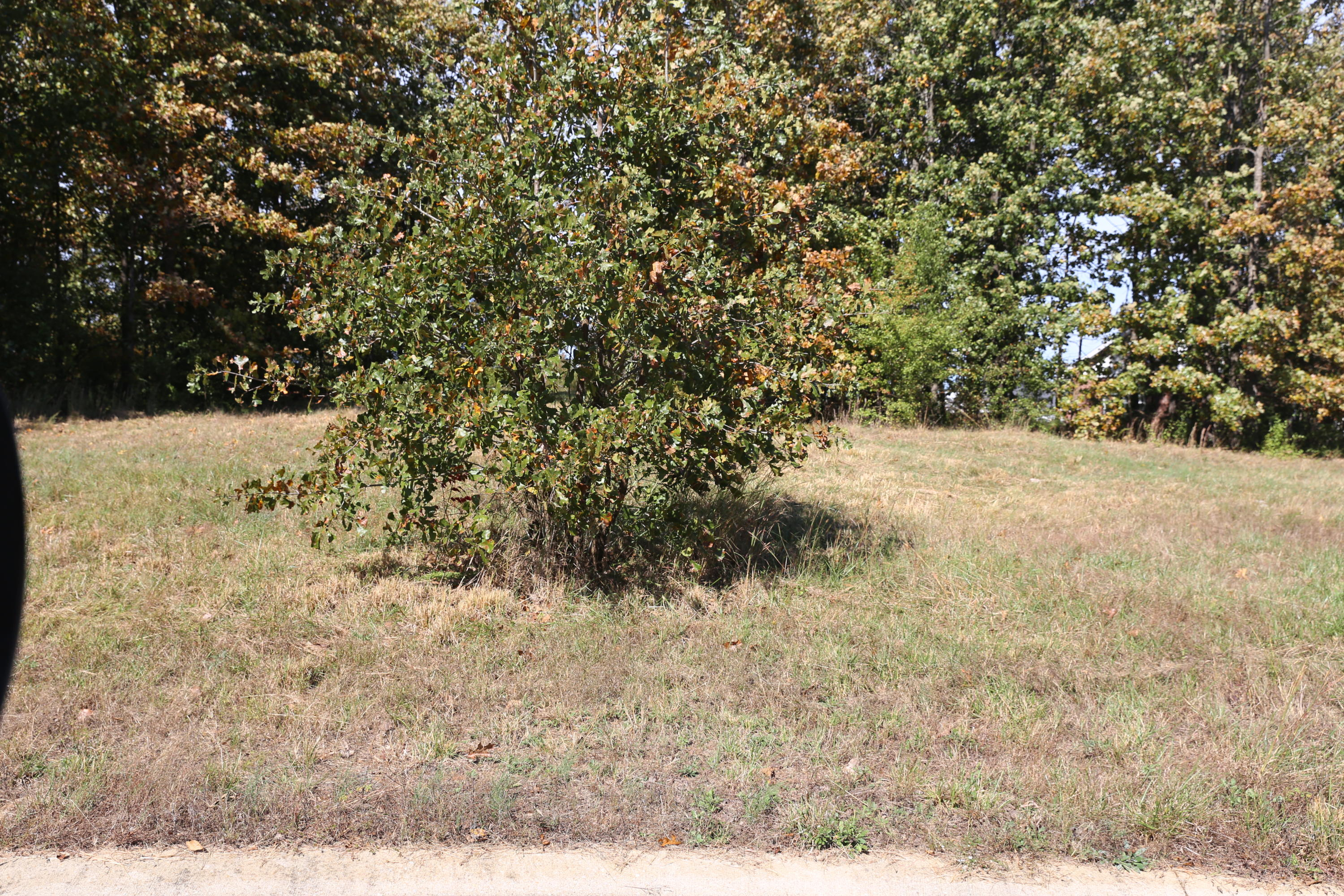 000 Wild Turkey Block 1 Lot 4 Property Photo