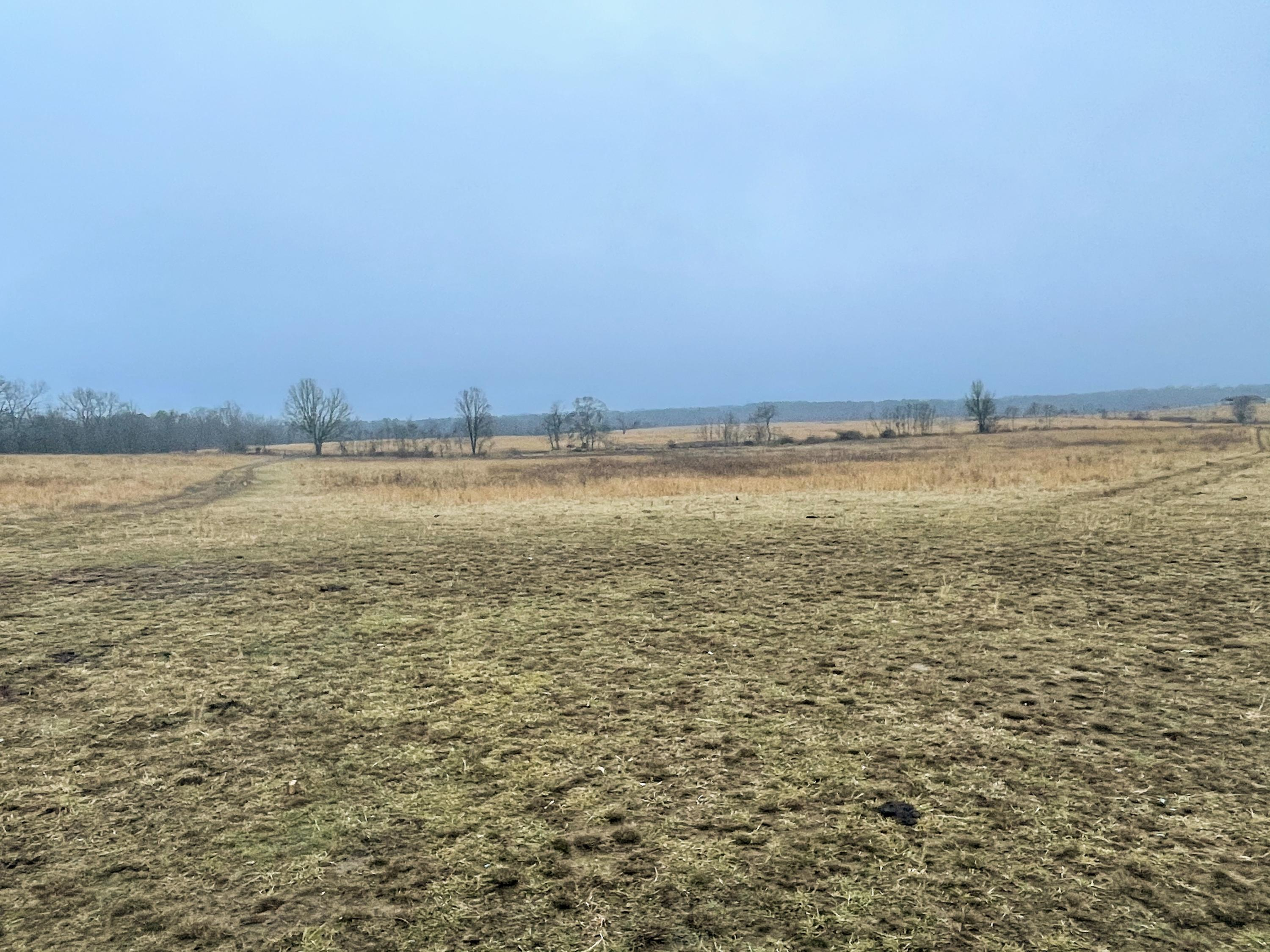 Tbd County Road 333a Property Photo - Summersville, MO real estate listing